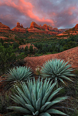 Agave Photograph - Agave On The Rocks by Guy Schmickle