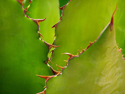 Photograph - Agave Shark by Steven Myers