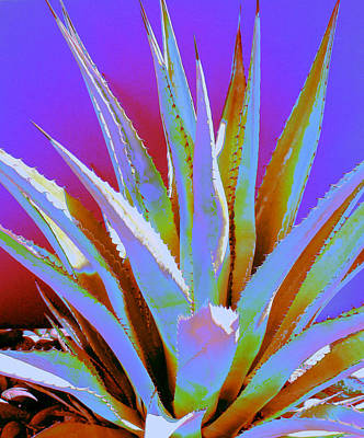 Photograph - Agave Spirit by M Diane Bonaparte