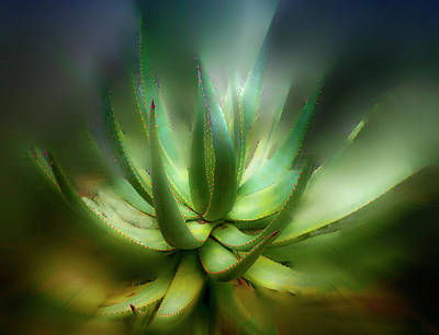 Agave Sunrise Art Print