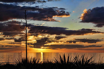 Photograph - Agave Sunset by HH Photography of Florida