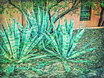 Photograph - Agaves by Sandra Selle Rodriguez