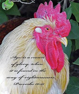 Age - Crown Of Glory Art Print by Cindy Treger