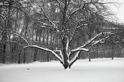 Photograph - Aged Apple Tree In Winter by Scott Kingery