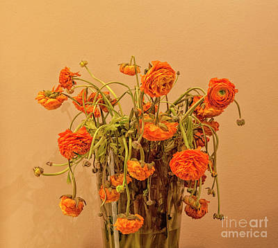 1920s Flapper Girl - Aged orange buttercups by Patricia Hofmeester