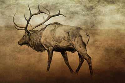 Digital Art - Aged Elk by TnBackroadsPhotos