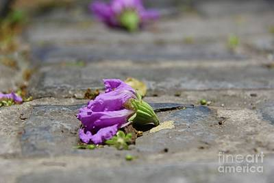 Photograph - Aged In Purple And Blue by Suzanne Oesterling