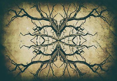 Photograph - Aged Sepia Tree Dual by John Williams