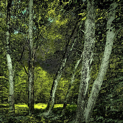 Photograph - Aging Forest by David Patterson