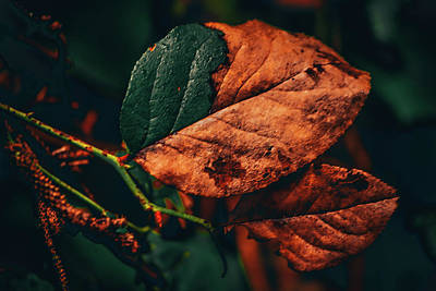 Photograph - Aging Leaves by Bonnie Bruno
