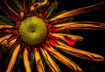 Photograph - Aglow by Cathy Donohoue