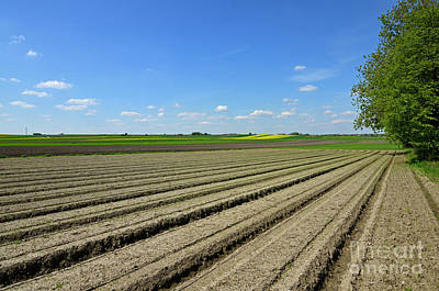 Crop Rotation Wall Art - Photograph - Agricultural Perspective by Ewa Olek