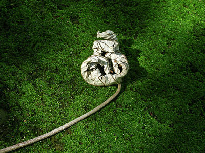 Aguished Leaf Art Print by Douglas Barnett