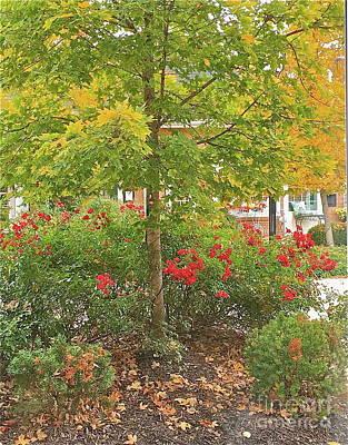 Photograph - Ah Autumn by Barbara Plattenburg
