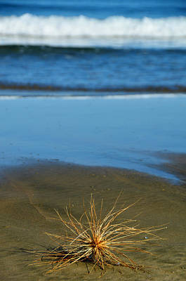 Ninety Mile Beach Photograph - Ahipara Tumbleweed by Helen Worley