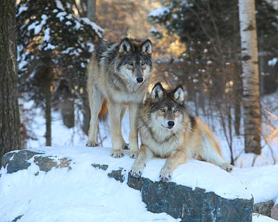 Aidan And Denali-brothers Forever Art Print by Gerry Sibell
