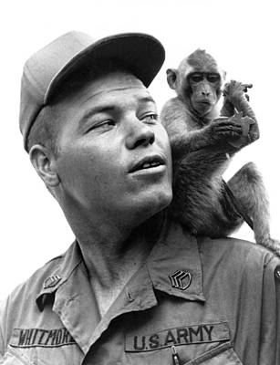 101st Airborne Division Photograph - Aiirborne Monkey Mascot by Underwood Archives