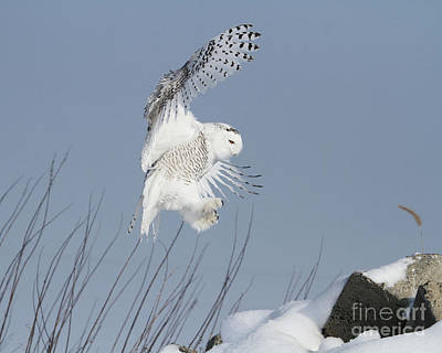 Photograph - Air Acrobat  by Heather King