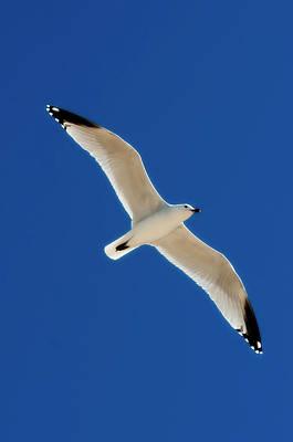 Photograph - Air Angel Blue By Pedro Cardona by Pedro Cardona