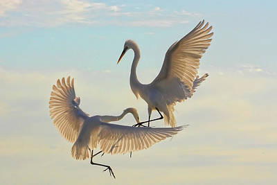 Photograph - Air Dance by HH Photography of Florida