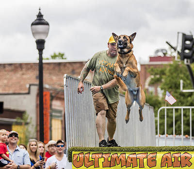 Photograph - Air Dog 2 by Bill Linhares