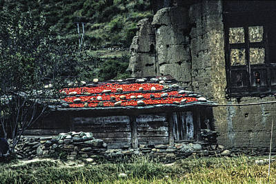 Photograph - Air Drying Red Peppers....bhutan.... by Paul Vitko