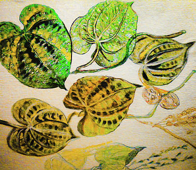 Potato Mixed Media - Air Potato Plant Life Cycle by Barbara Searcy