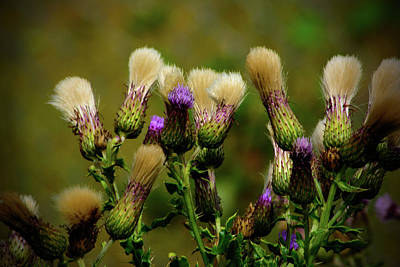 Photograph - Airport Thistles by Tikvah's Hope