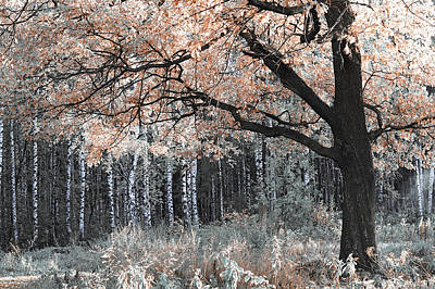 Photograph - Airy Autumn In Woods by Jenny Rainbow