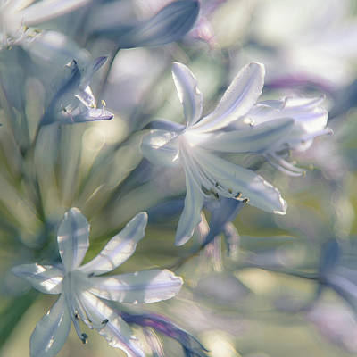 Blue Lily Of The Nile Photograph - Airy Fairy by Alexander Kunz