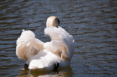 Stratford Photograph - Airy Feathers by Maria Keady