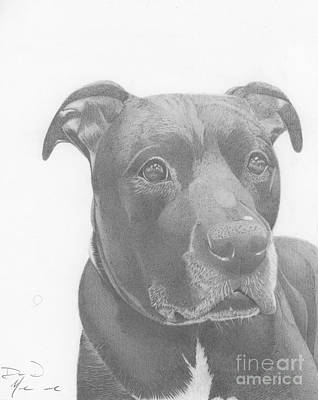 Drawing - Ajax Graphite Dog Portrait  by Dave Nevue