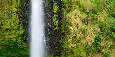 Photograph - Akaka Falls by Mark Robert Rogers