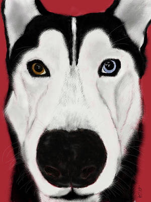 Siberian Husky Digital Art - Akeda by Marci Potts