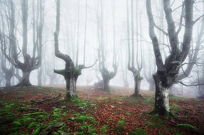 Fantasy Bark Photograph - Akelarre by Mikel Martinez de Osaba