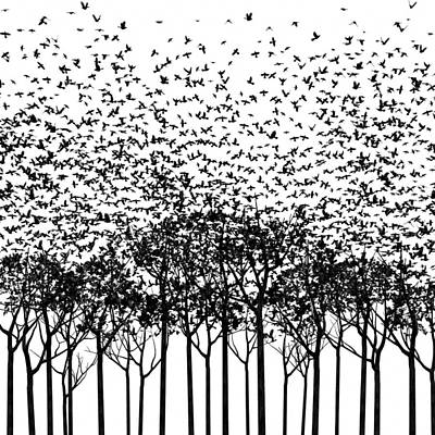 Starlings Digital Art - Aki Monochrome by Cynthia Decker