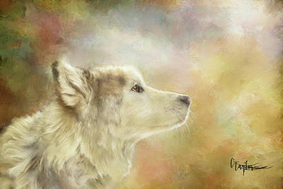 Mixed Media - Akira, The Alaskan Malamute by Colleen Taylor