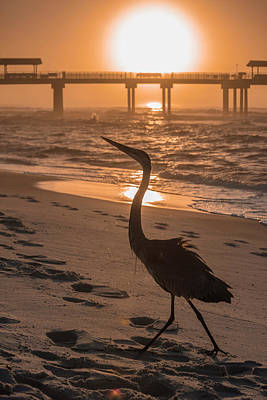 Photograph - Alabama Blue Heron by John McGraw