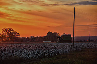 Alabama Cotton Fields Art Print