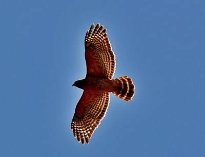 Photograph - Osprey by Eileen Brymer