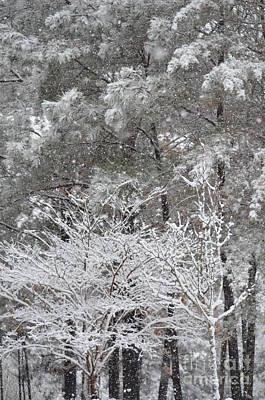 Photograph - Alabama Snow 2017 by Maria Urso
