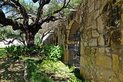 Photograph - Alamo by Mike Murdock