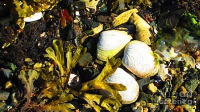 Photograph - Alaska Clams by Laurianna Taylor