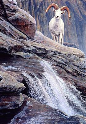 Painting - Alaska Dal Sheep by Brian Durfee