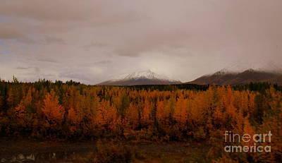 Photograph - Alaska Plains by Lennie Malvone