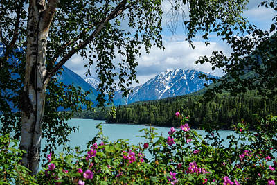 Photograph - Alaska Through The Trees by John McArthur