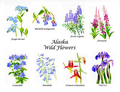 Lupine Painting - Alaska Wild Flowers Poster Horizontal by Sharon Freeman