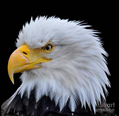 Photograph - Alaskan Bald Eagle by Diane E Berry