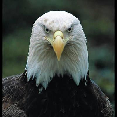 Photograph - Alaskan Eagle by Quwatha Valentine