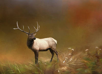 Photograph - Alaskan Elk by Phyllis Taylor